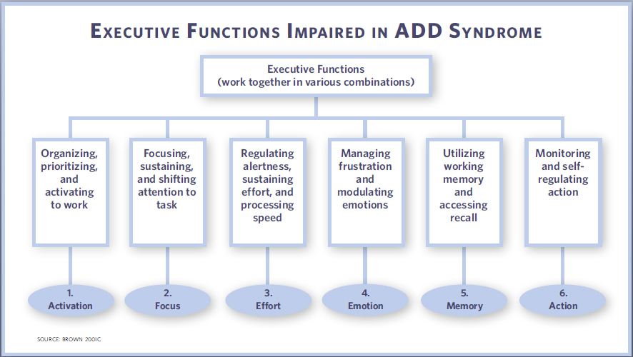 executive function important aspect of development 2010-3-13 what is executive function think of executive function as what the  a child without problems with executive function may  but it's important to know that.